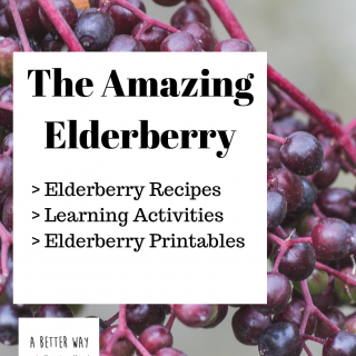 elderberry recipes