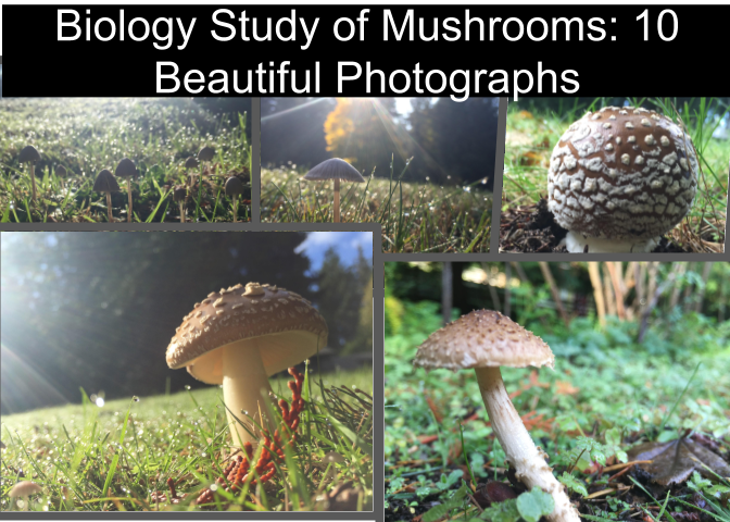 biology study of mushrooms